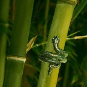 Snake ring World Animal Protection